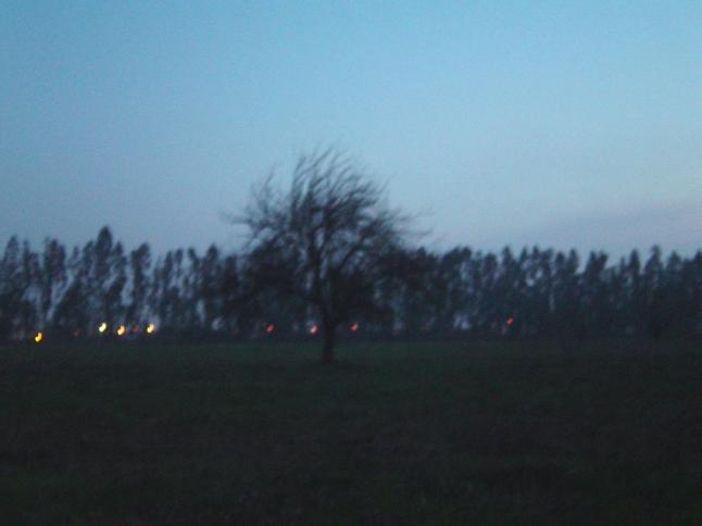 Árbol en la noche